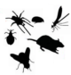 Providing Pest Control Contracts across the South West